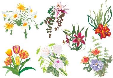 color flowers set