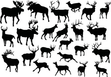 Twenty three deers