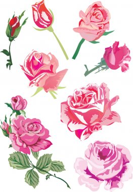 eight pink roses