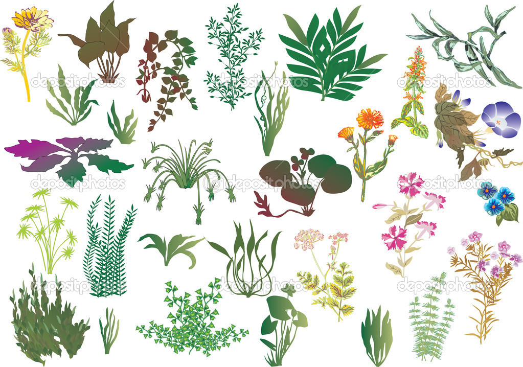 Collection Of Different Plants Stock Vector C Dr Pas 6261608