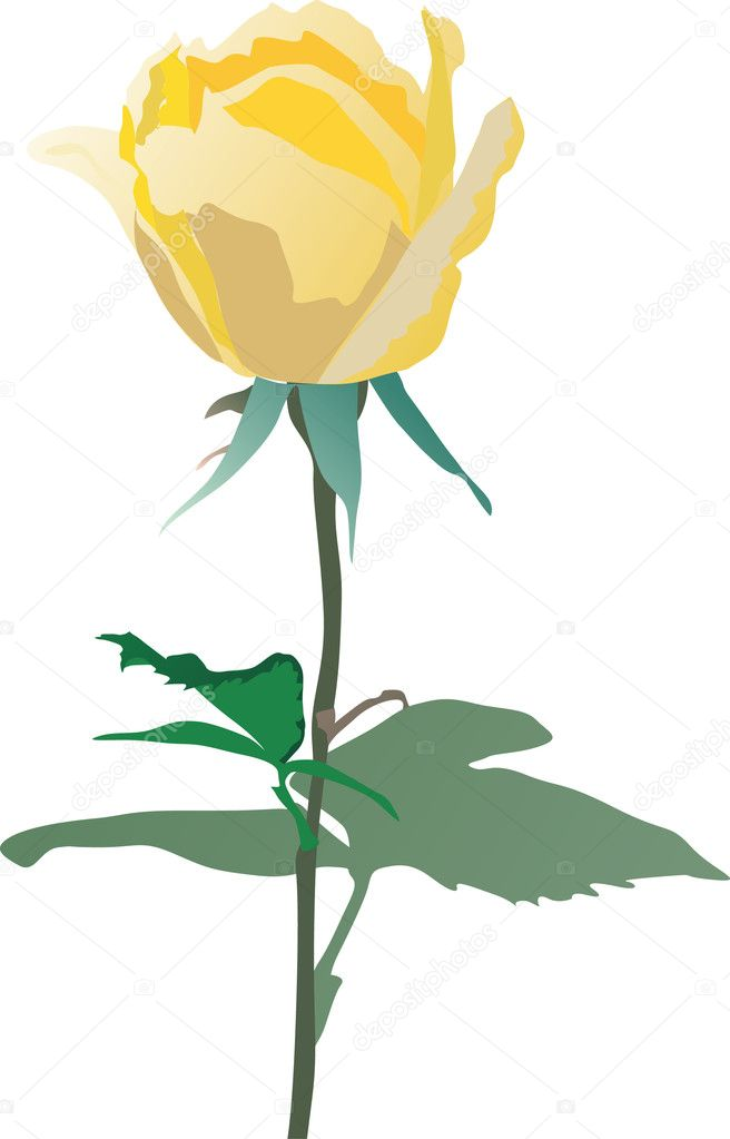 黄色いバラ イラスト ストックベクター Drpas 6261683