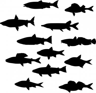 twelve fish silhouettes