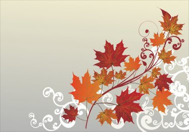 white curled corner and fall maple leaves