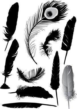 ten black feathers