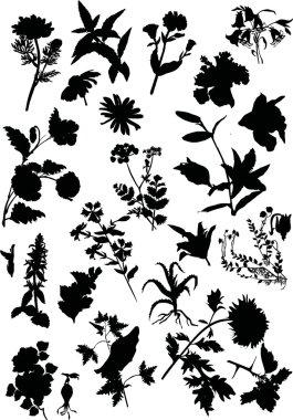 large flower silhouette set