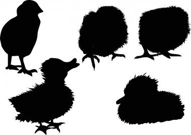chickens and duckings silhouettes