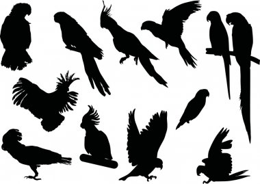 black parrot collection