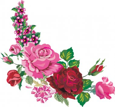 pink and red rose corner on white