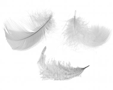 Three white feathers