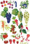 Fényképek gyűjtemény a különböző bogyók, fehér