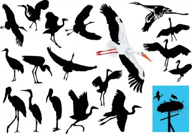 stork collection on white