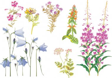 summer wild flowers collection
