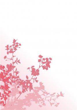 four pink sakura branches