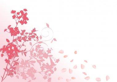 pink sakura with falling petals
