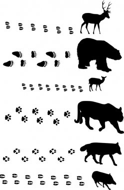six animals with tracks on white