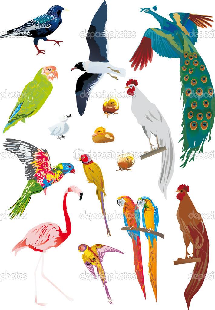 set of different color birds