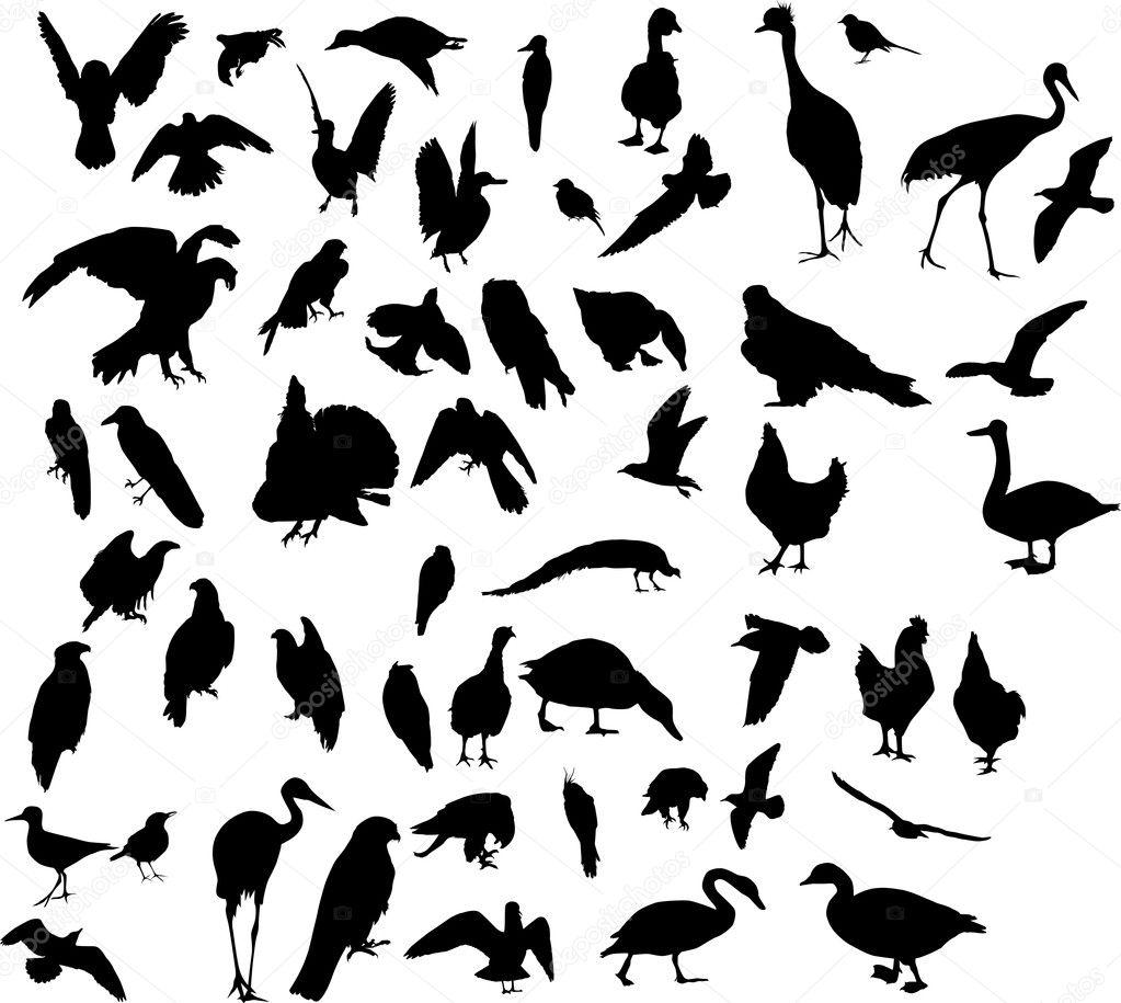 fifty three bird silhouettes u2014 stock vector dr pas 6415925