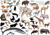 set of wild mammals isolated on white