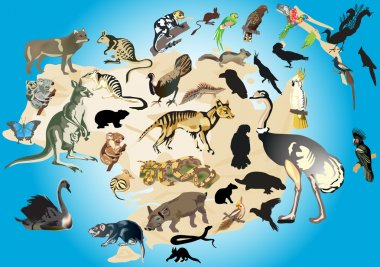 Australia fauna illustration