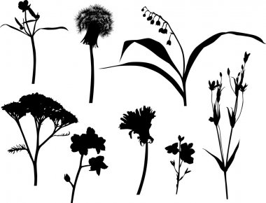 set of isolated wild flowers silhouettes