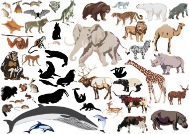 set of wild mammals isolated on white