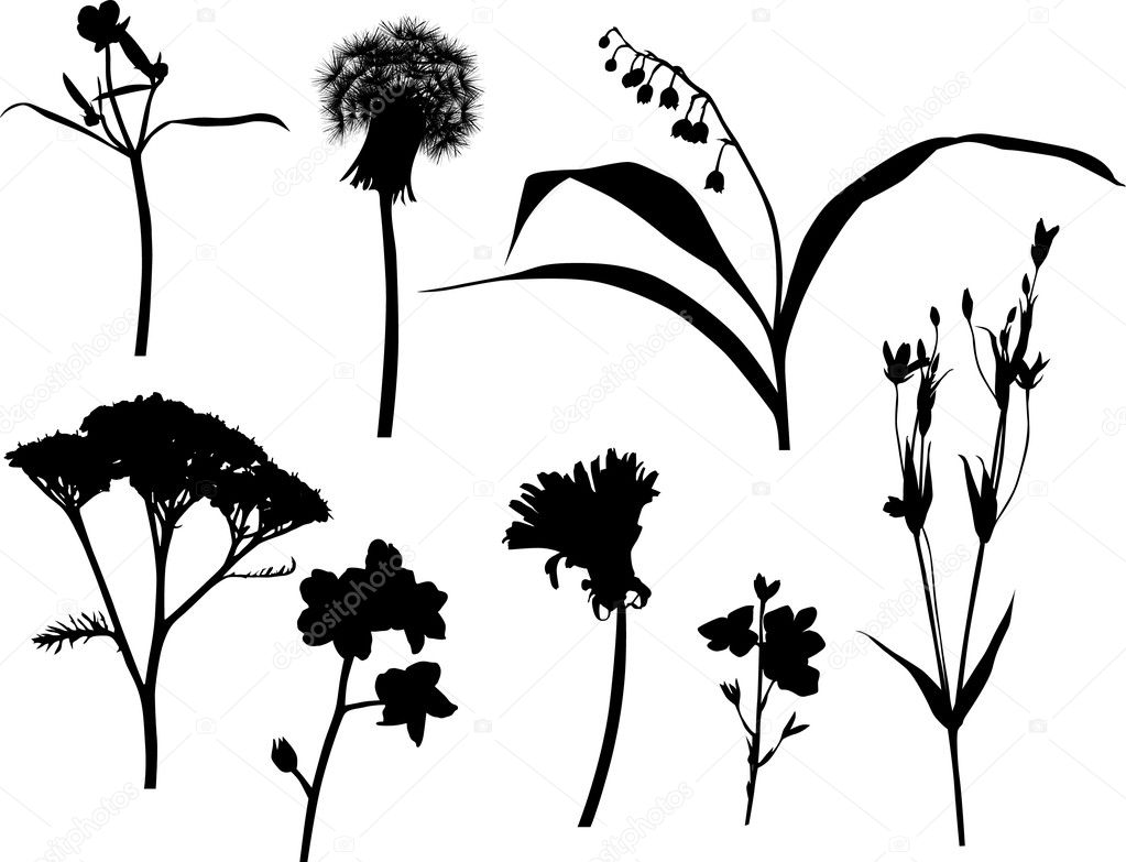 Set of isolated wild flowers silhouettes — Stock Vector ...
