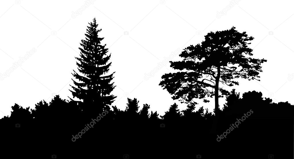 Фотообои Forest silhouette isolated on white