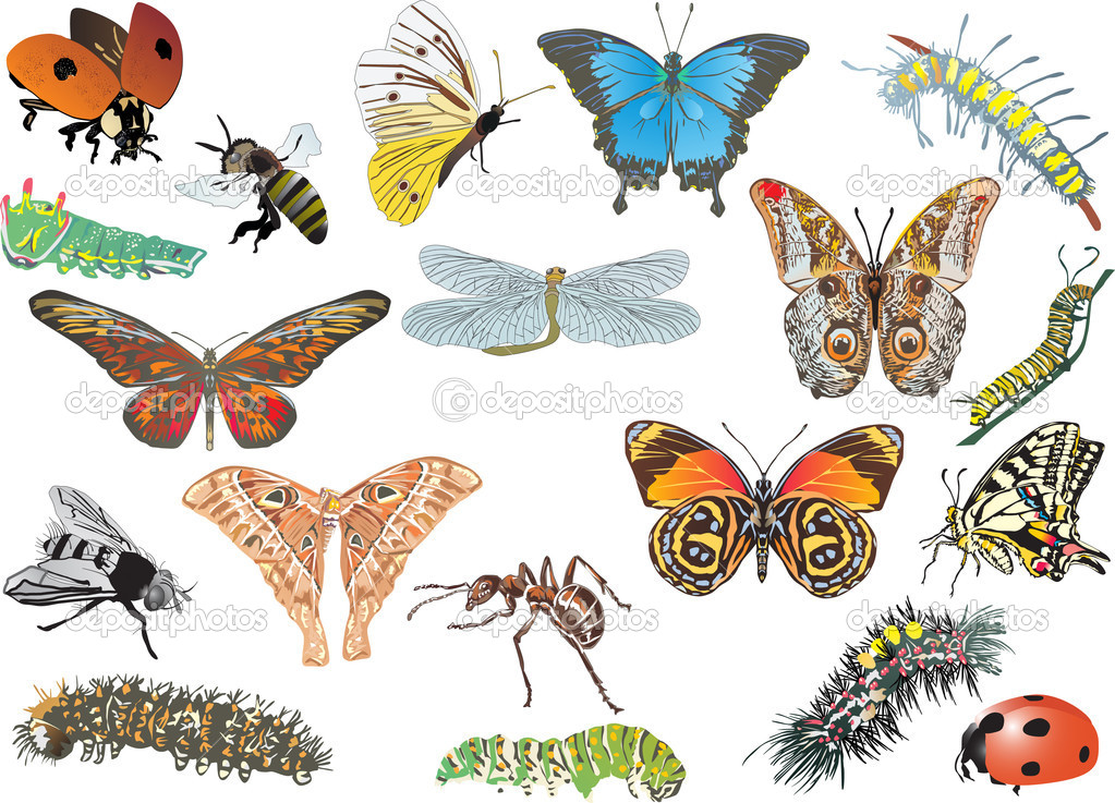color insect collection on white