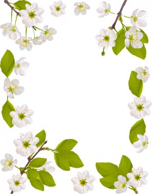 frame with white cherry flowers illustration