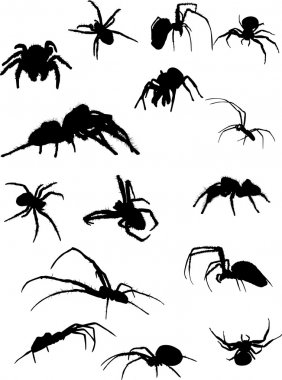 fifteen spider silhouettes