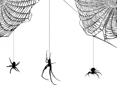 three spiders in web illustration