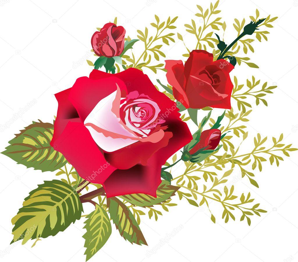 Dibujos Rosa Bonitas Flores Rosas Rojas Aisladas En Blanco