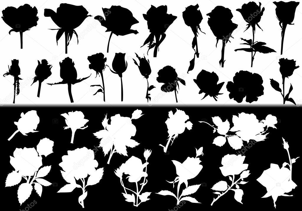 Fleur Rose Blanc Et Noir Collection De Silhouettes Image