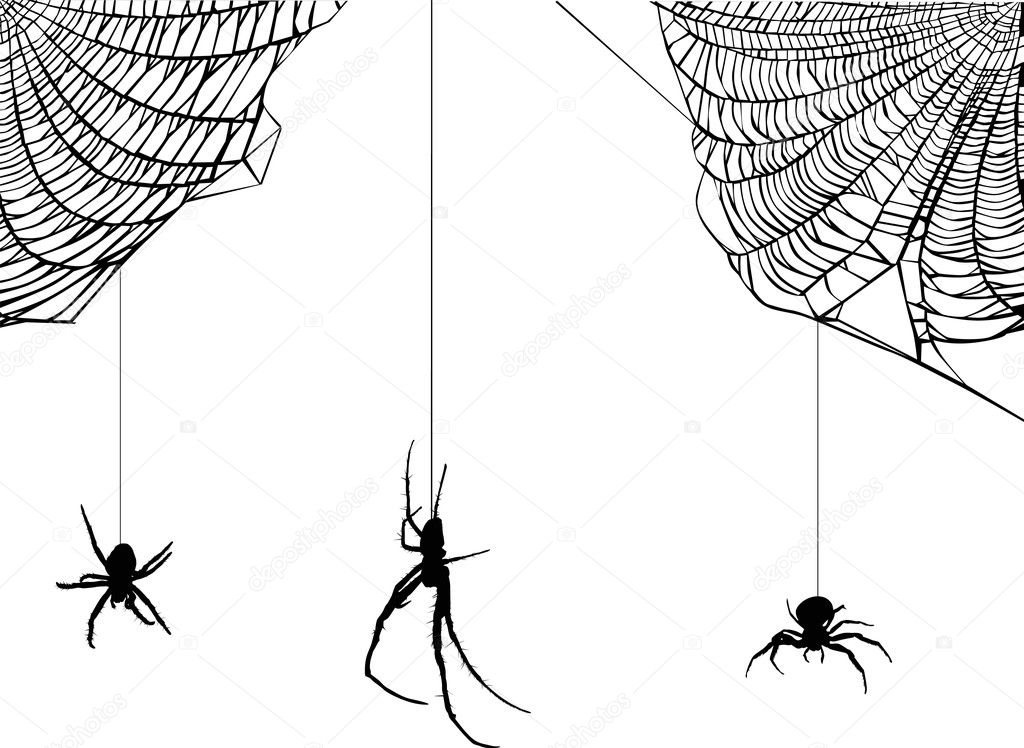 three spiders in web illustration — Stock Vector © Dr.PAS ...