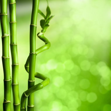 Bamboo - green natural background