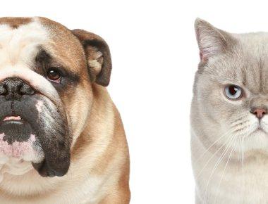 Dog and cat. Half of muzzle close-up portrait