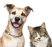 Fotografie pes a kočka na bílém pozadí