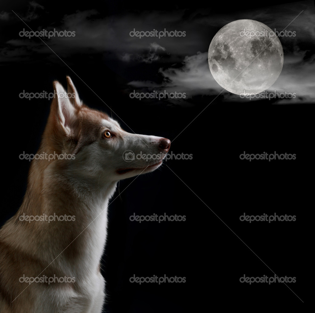 Dog is looking on the full moon