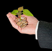 Fotografie Sapling growing from coins
