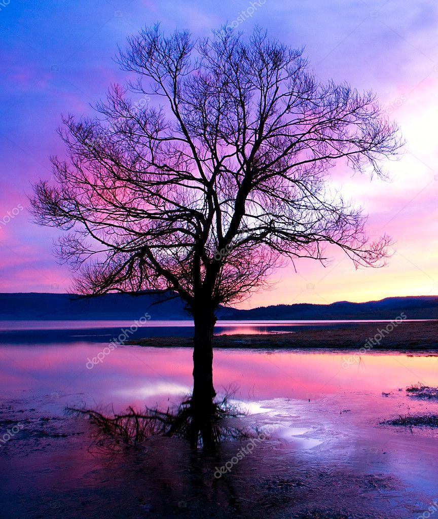 Tree dusk silhouette