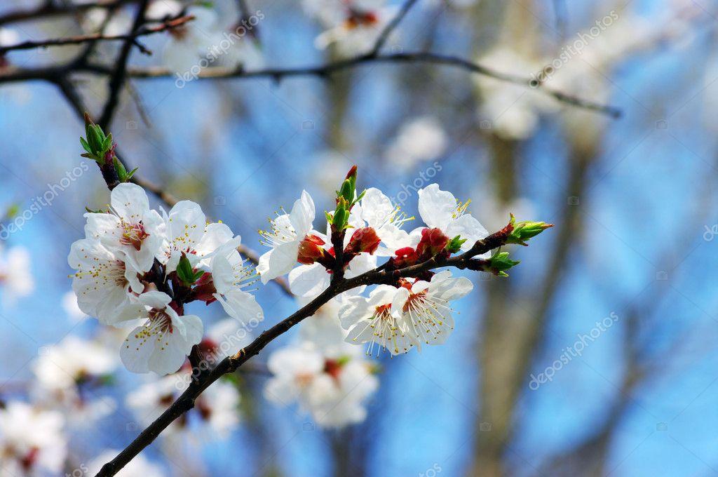 Bahar çiçek Açan çiçekler Stok Foto Dolnikov 5495765