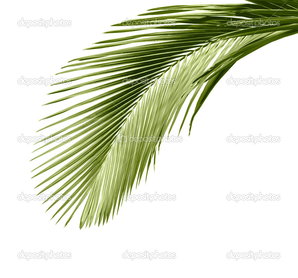 leaves of palm tree u2014 stock photo khuang 5779141