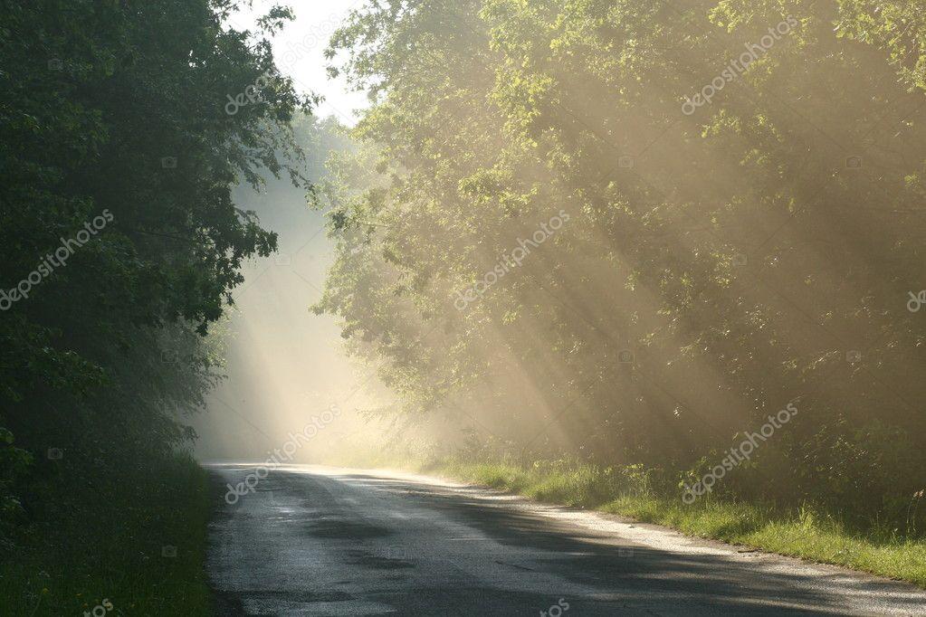Фотообои Проселочной дороге во время заката