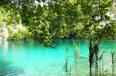 Crystal clear lake in Plitvice, Croatia