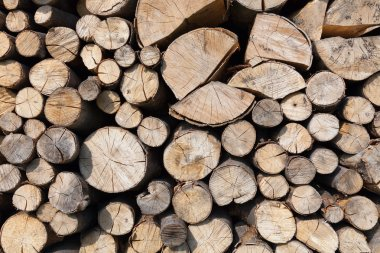 Dry chopped firewood