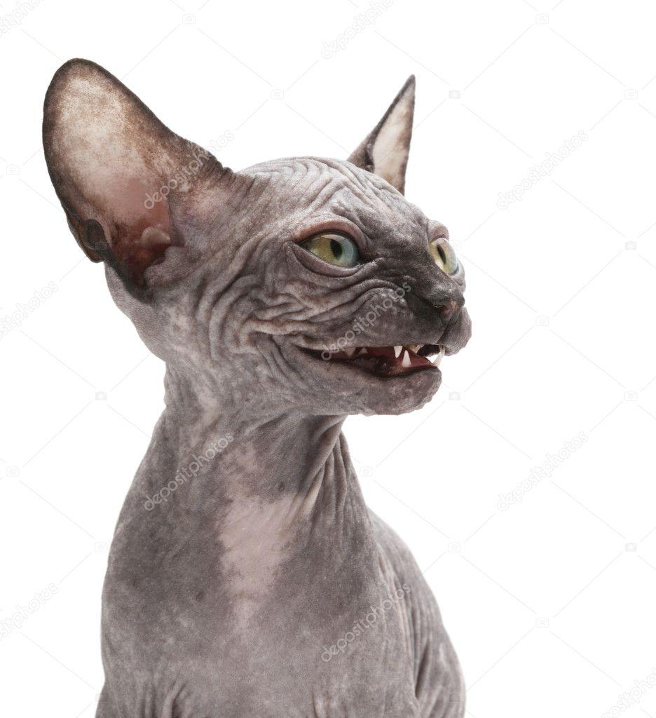 plešatý kočička obrázkyfotky černých kundiček