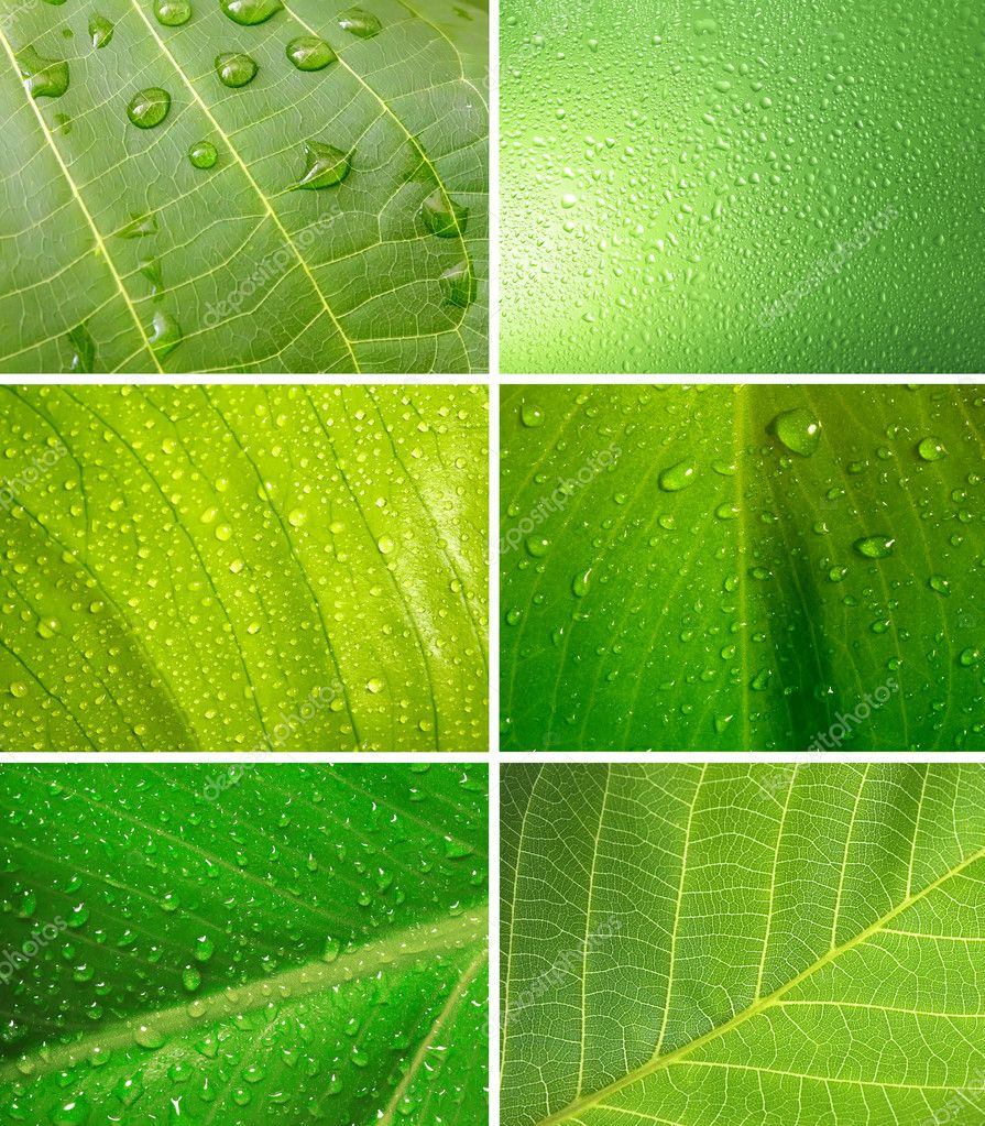 Set of leaf with drops