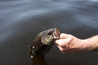 Freshwater bass fishing
