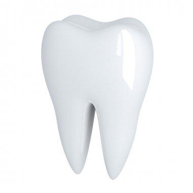 Tooth Human