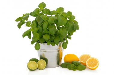 Basil Herb and Citrus Fruit